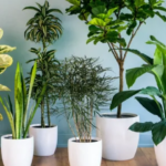 7 Best Indoor Plants for Asthma and Allergies