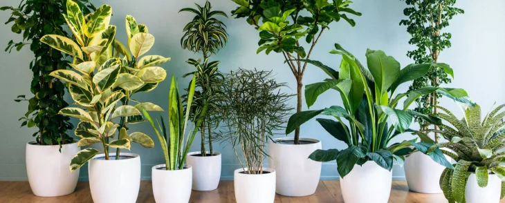 Best plants for asthma